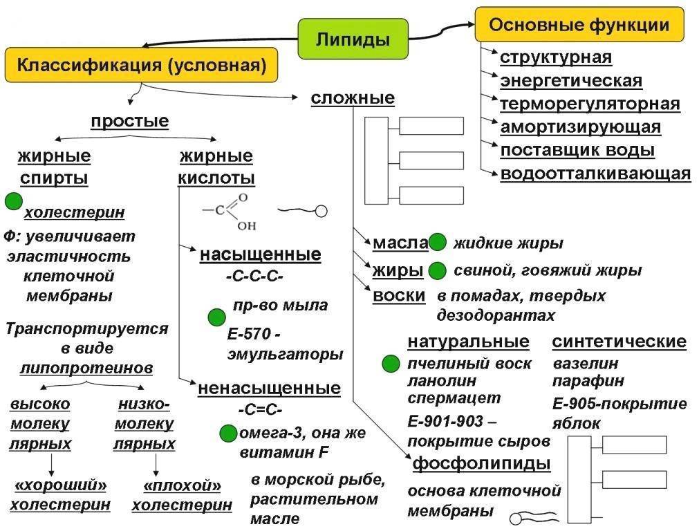 Классификация простых и сложных липидов
