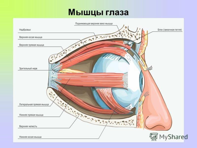 Что нужно делать при болезненных ощущениях в глазах.