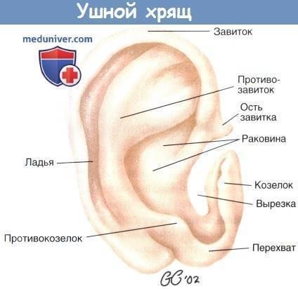Воспалительные заболевания ушной раковины и наружного слухового прохода