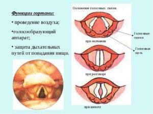 Воспаление голосовых связок: симптомы, диагностика и лечение