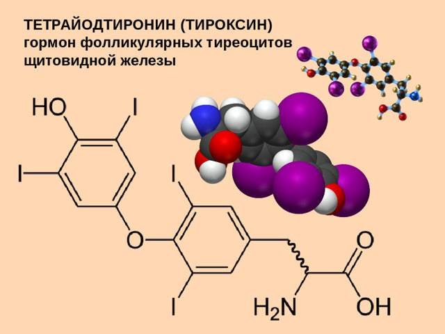 тироксин норма у женщин