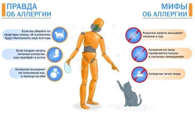 Аллергический кашель — причины, симптомы, лечение, профилактика