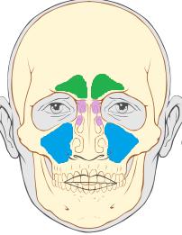 Как прогреть нос в домашних условиях при гайморите и можно ли это делать