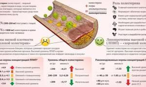 норма холестерина 55 лет