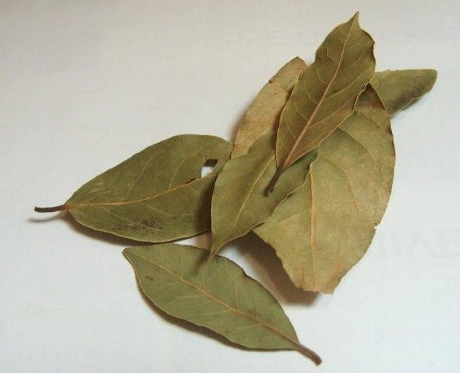 Рецепты с лавровым листом при геморрое, показания и противопоказания, целебные свойства