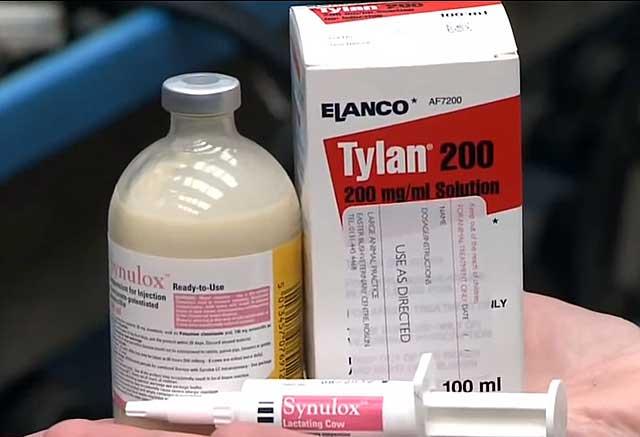 Эффективность антибиотиков при мастите