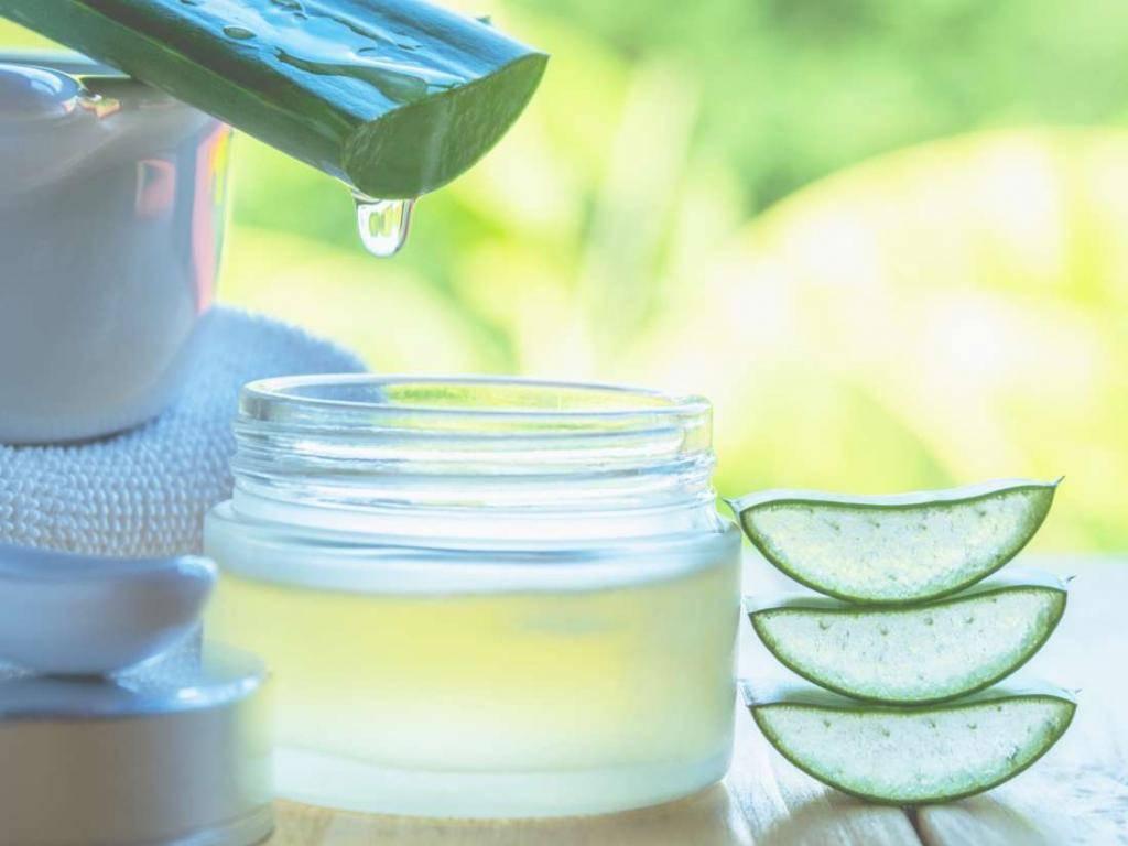 Лечение носа  средствами из сока алоэ при насморке, заложенности, гайморите, аденоидах и полипах