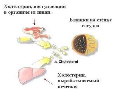 Таблица содержания холестерина в продуктах питания: топ-7 запрещенных ингредиентов, влияние способа приготовления на количество холестерола в еде, основные правила диеты