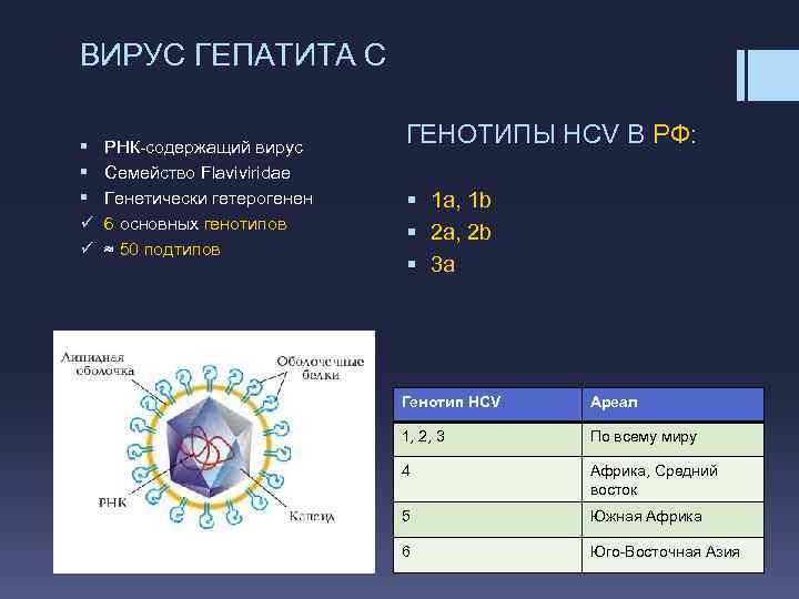 Что такое генотип гепатита c