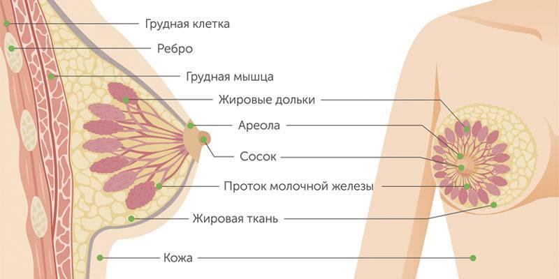 Рак молочной железы 1 стадии выживаемость. гормонозависимый рак молочных желез: стадии, лечение и прогнозы