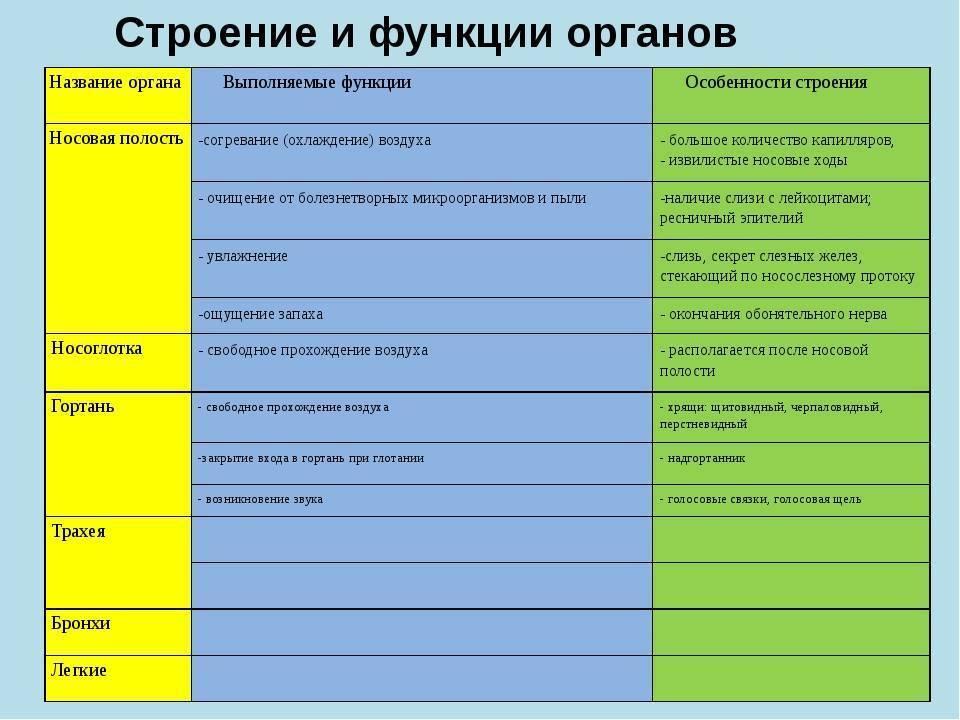 Особенности строения носоглотки