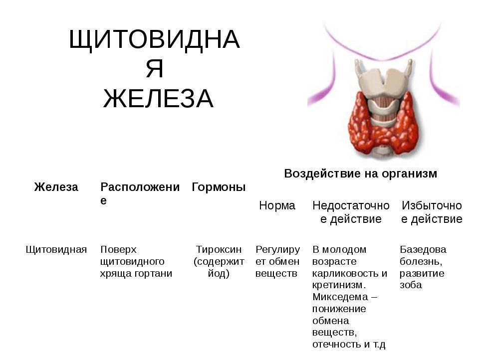 узел в щитовидке гормоны в норме