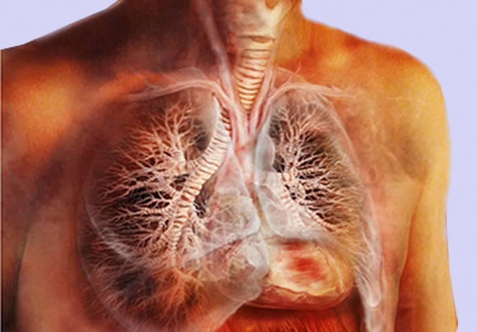Трахеит: причины, симптомы, диагностика и лечение