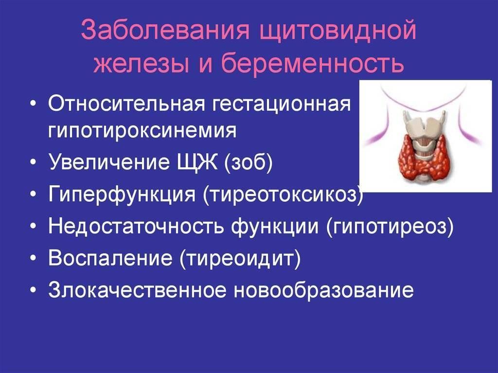 Беременность без щитовидки - беременность без щитовидной железы - запись пользователя оля (ol-fomen) в сообществе зачатие в категории душевные переживания - babyblog.ru