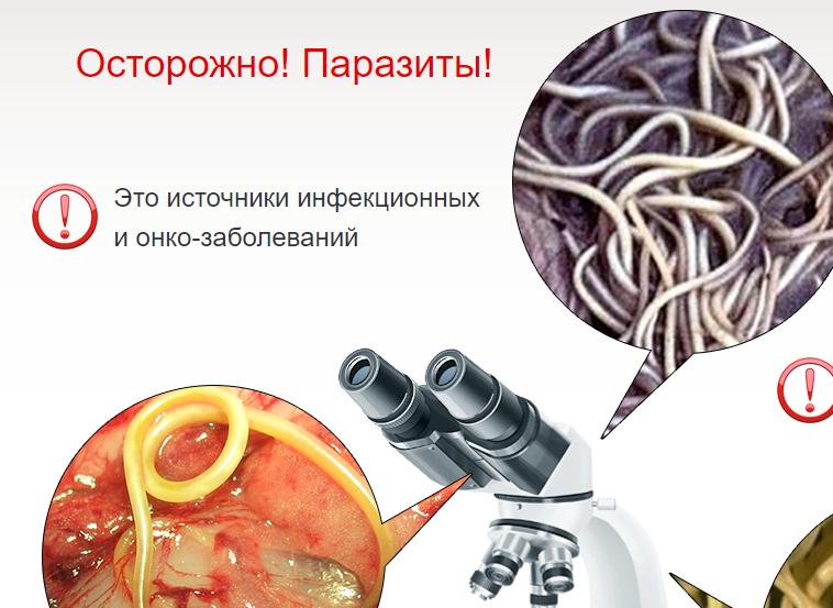 Профилактика от паразитов