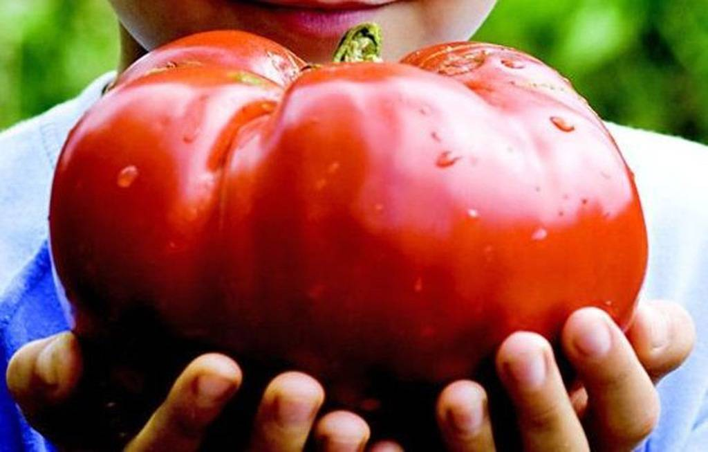 12 лучших продуктов, снижающих холестерин