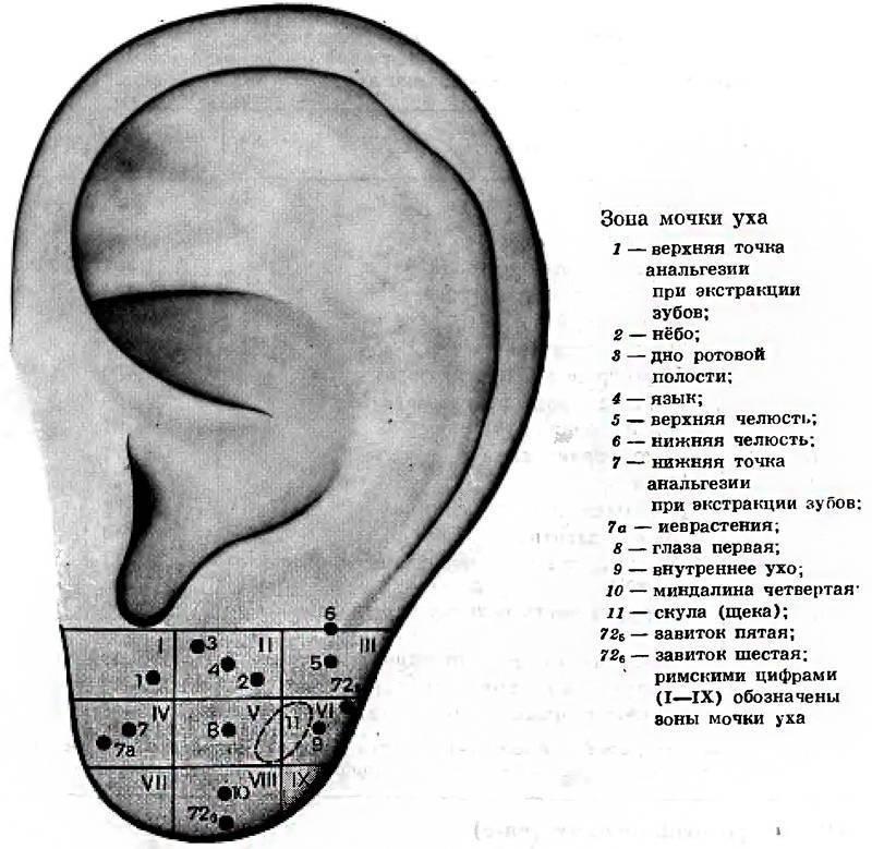 Точки на ушах отвечающие за позвоночника