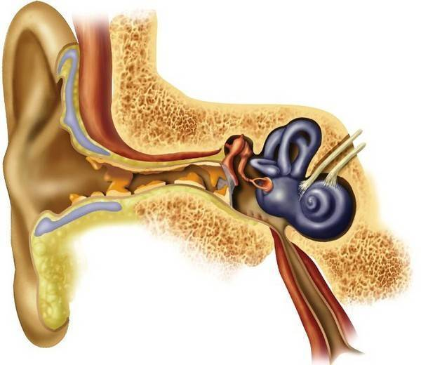 Причины запаха из ушей у человека и лечение