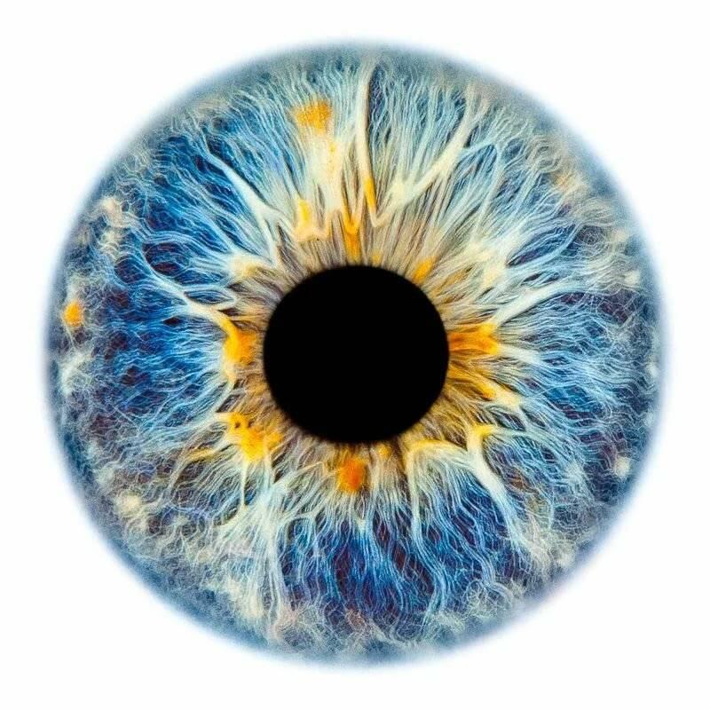что такое радужка глаза
