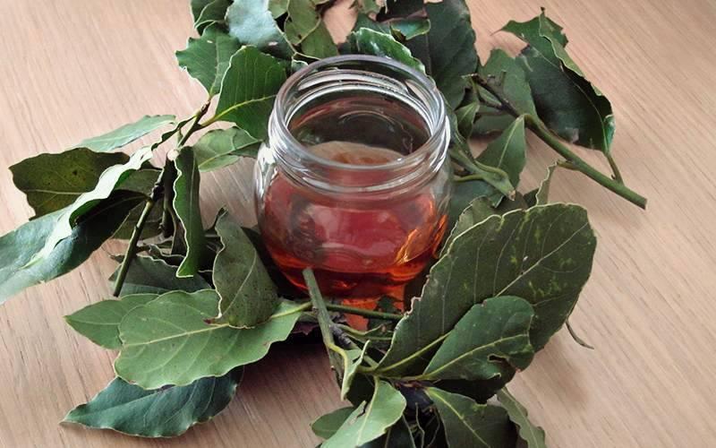 Лечение геморроя лавровым листом в домашних условиях: ванночки, свечи и другие рецепты - lechilka.com