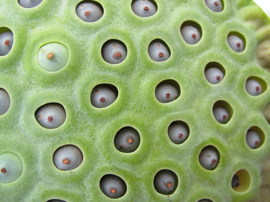 Трипофобия – причины, симптомы, лечение, методы коррекции