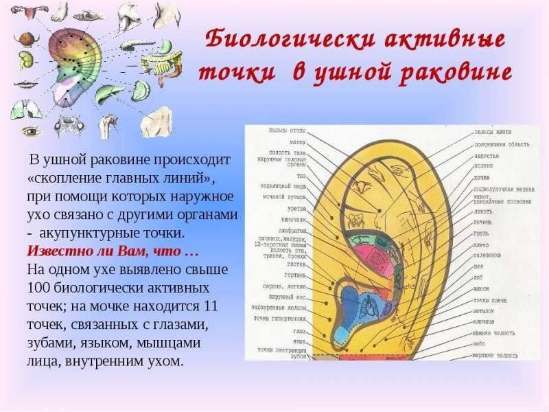точки на ушах для похудения