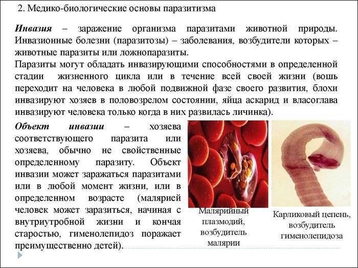 Признаки глистов у взрослого человека. симптомы
