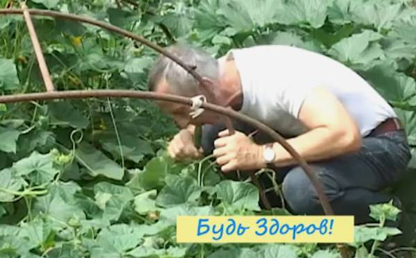 огурец от геморроя доктор попов