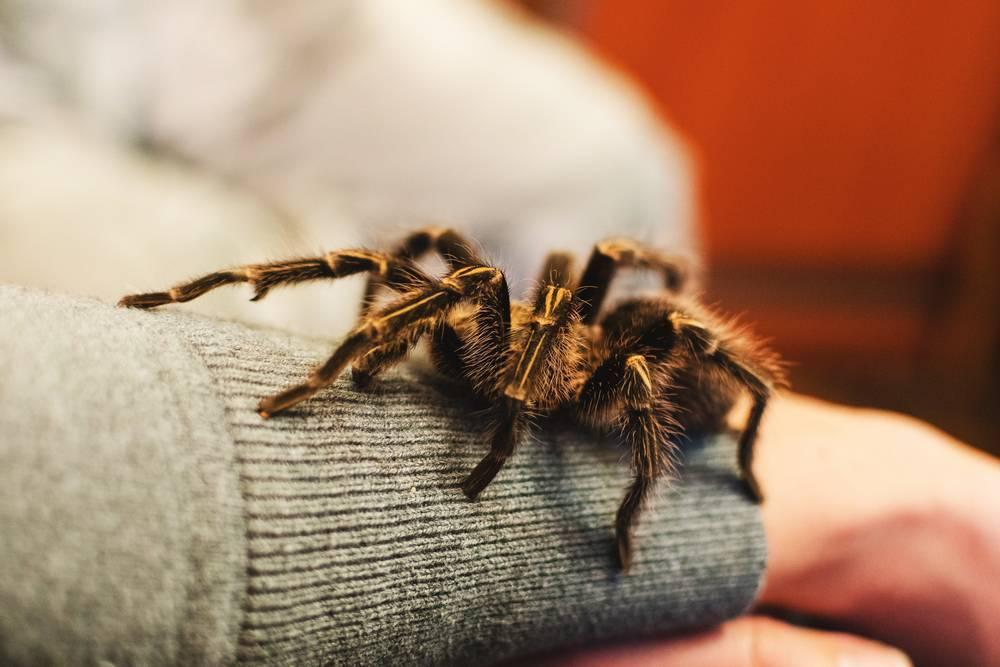 как называется боязнь пауков