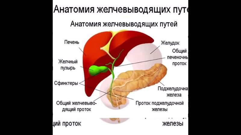 Диета и питание при застое желчи в желчном пузыре