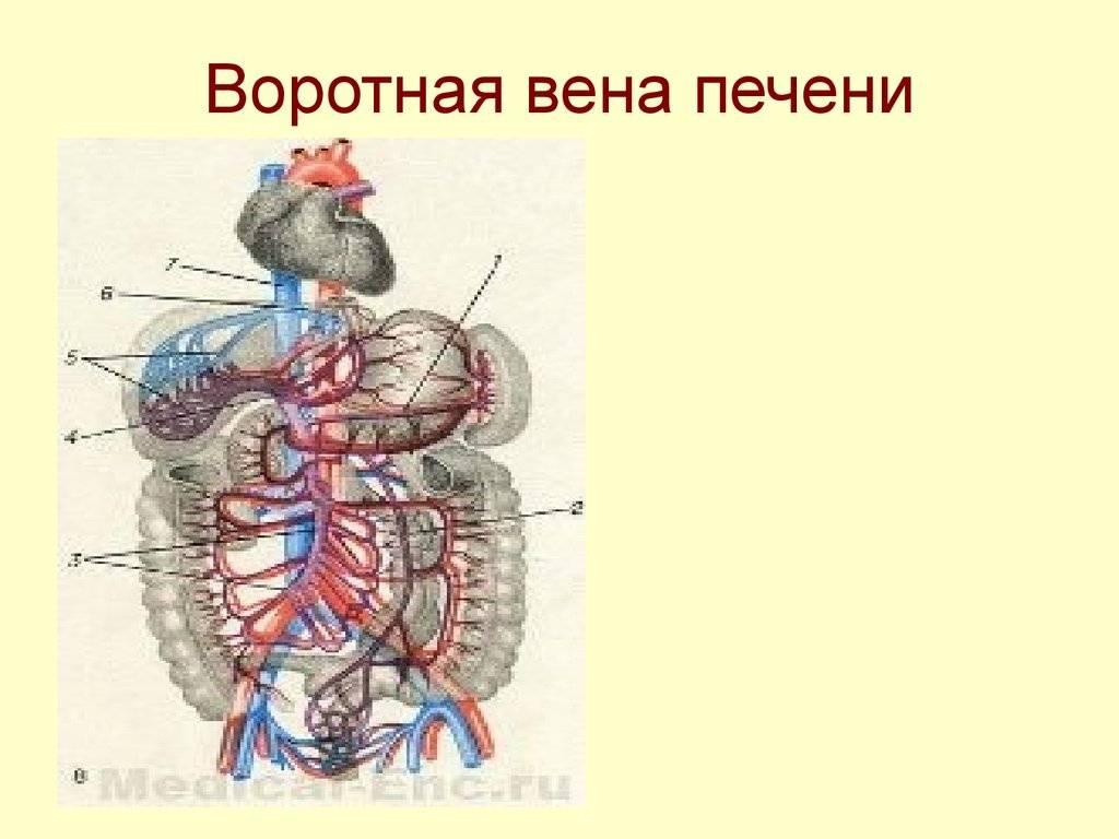 Лечение и диагностика тромбоза воротной вены