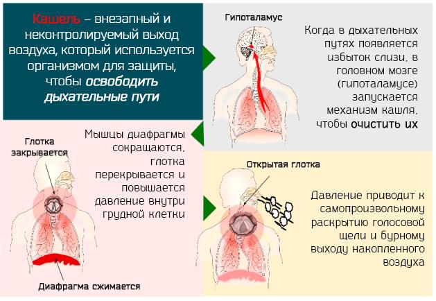 Жжение в груди при кашле