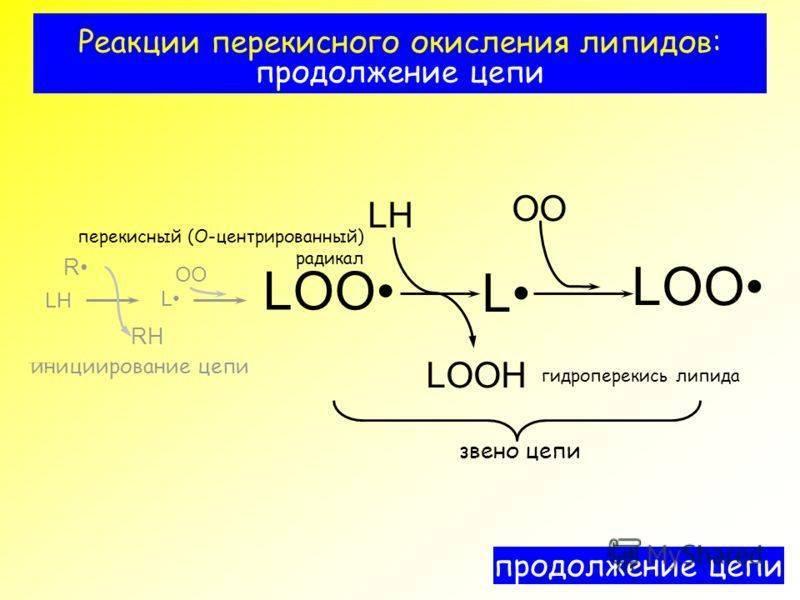 окисление липидов в клетке