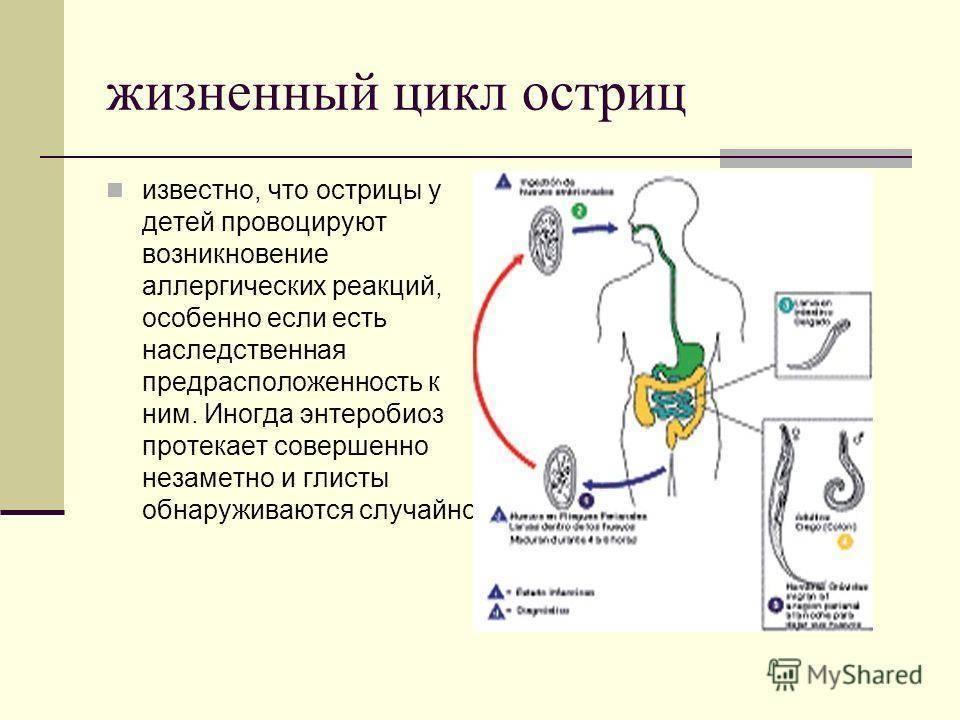 Острицы — википедия с видео // wiki 2