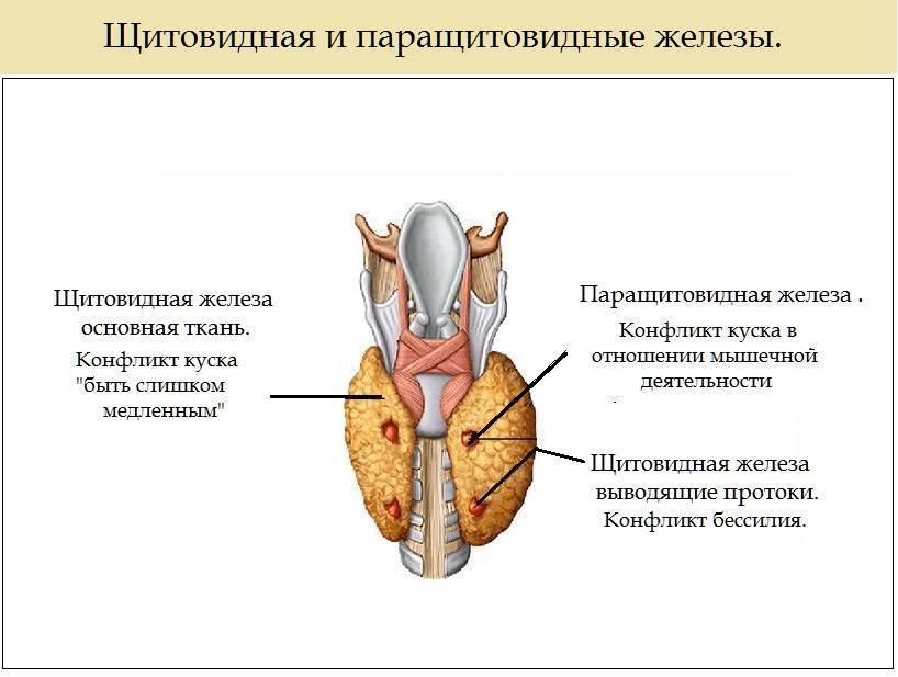 Щитовидная железа психосоматика
