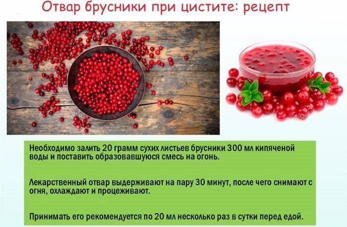 ягоды брусники при цистите