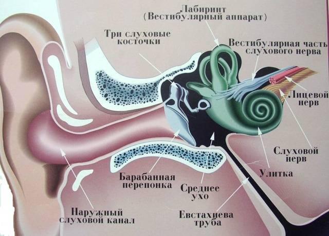 Вестибулярный неврит (нейронит): симптомы, лечение, прогноз