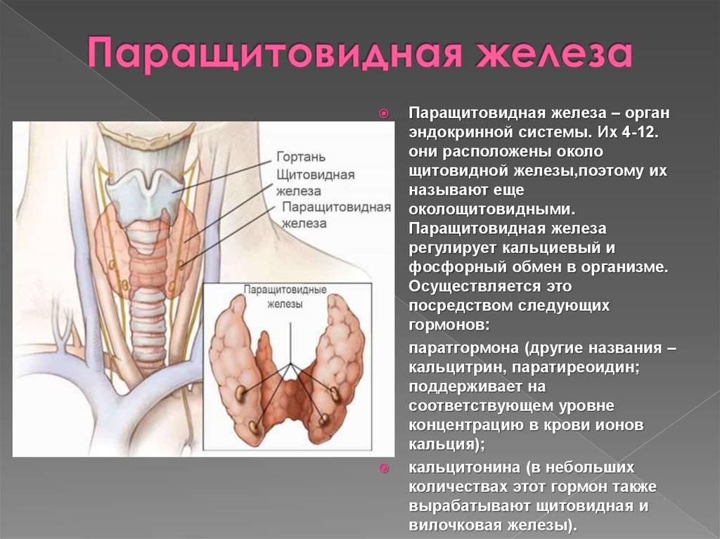 Как выполняют операцию по удалению околощитовидных желез