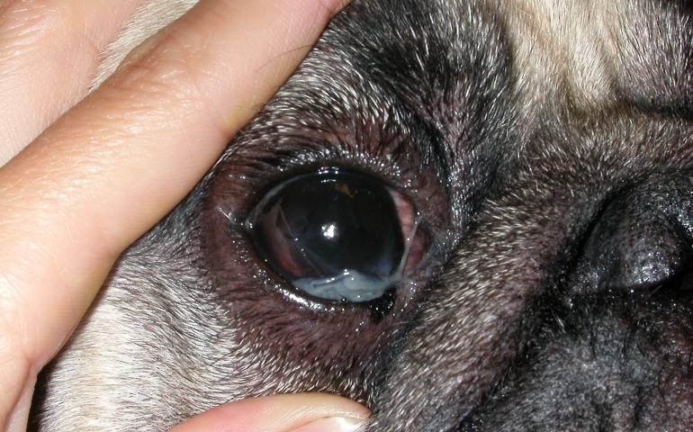 Чем лечить и что делать, если гноятся глаза у взрослого?