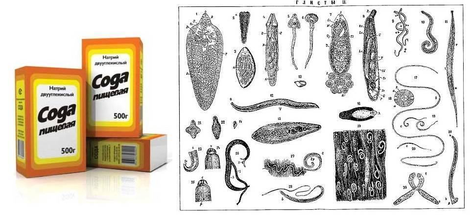 пищевая сода от паразитов