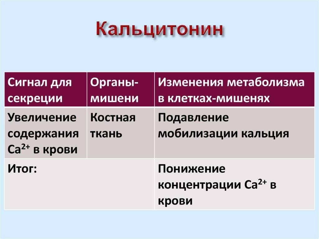 кальцитонин функция