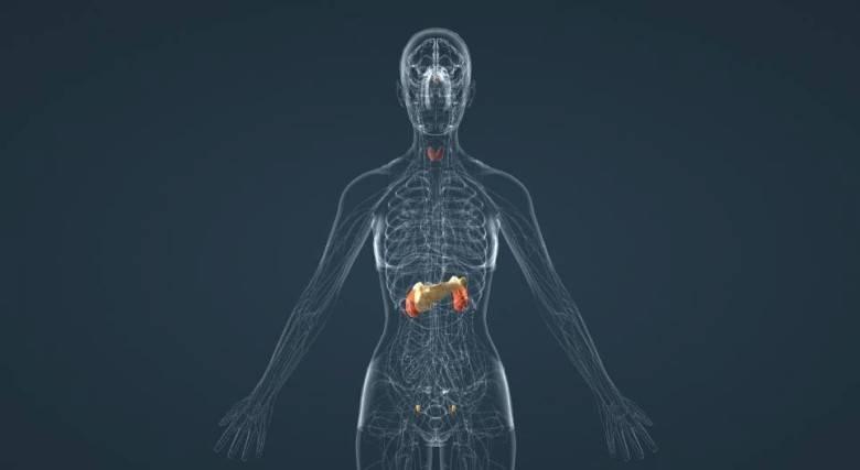 эндокринная система человека лечение