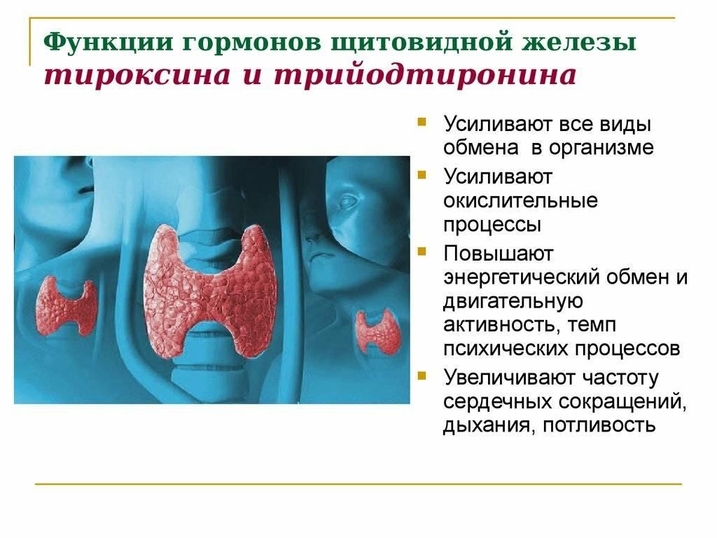 гормон щитовидной железы в таблетках