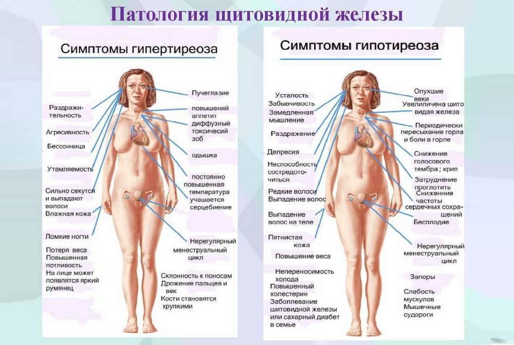 почему увеличивается щитовидная железа у женщин