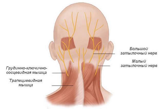 Невралгия затылочного нерва: симптомы и лечение