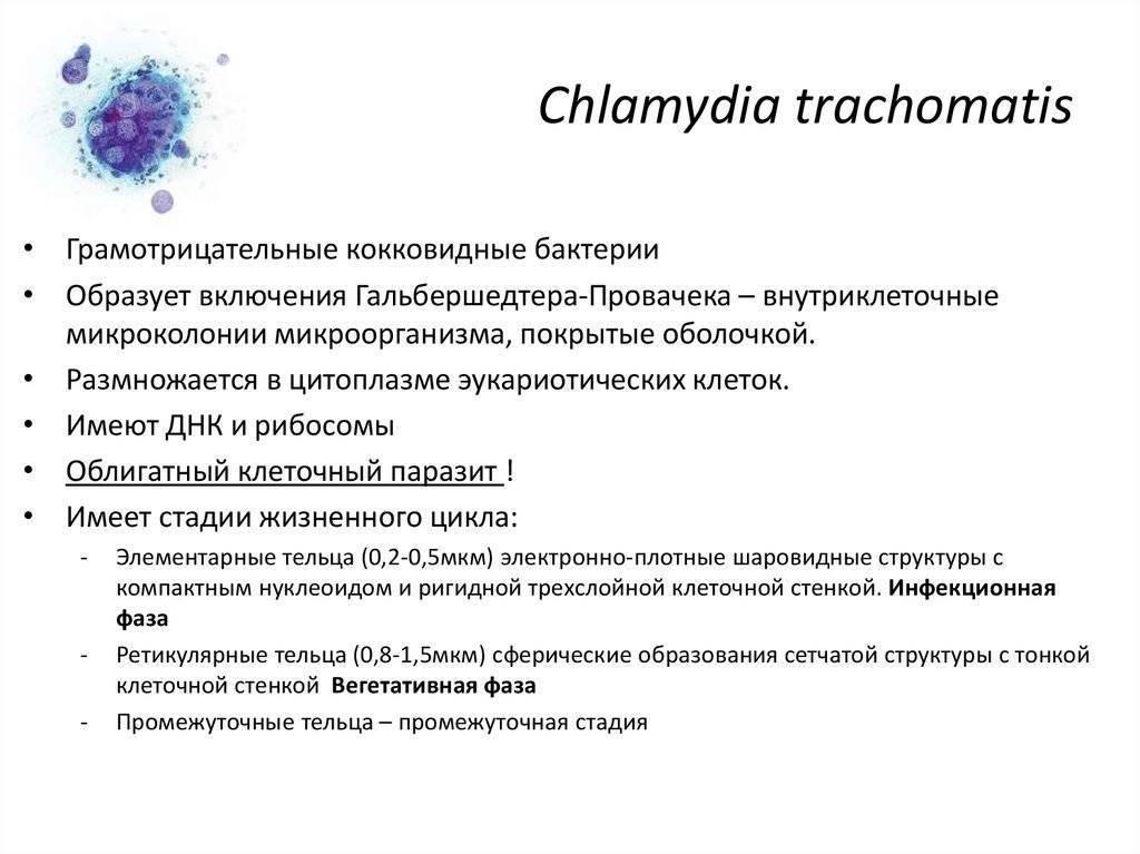 Лечение хламидиоза у женщин: особенности терапии и самые популярные препараты