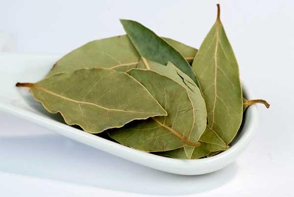 Лечение геморроя лавровым листом: эффективные рецепты