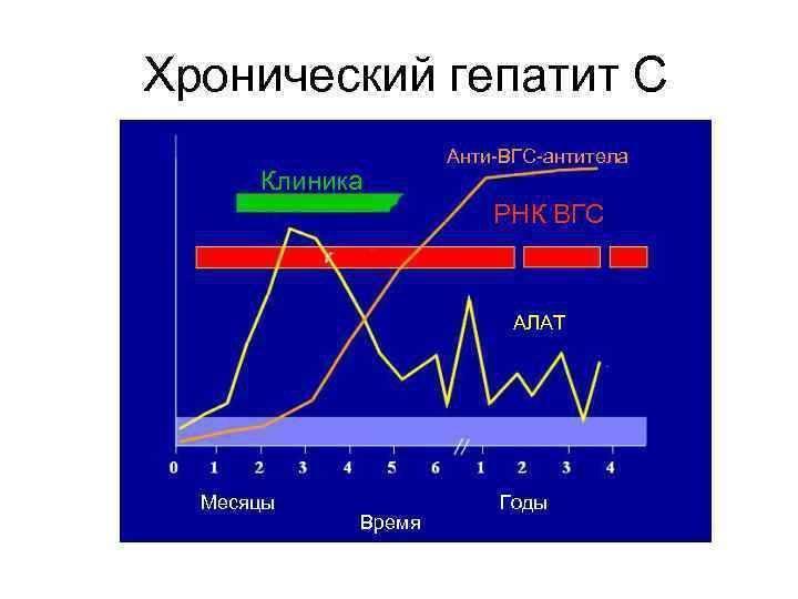 антитела в крови гепатита в