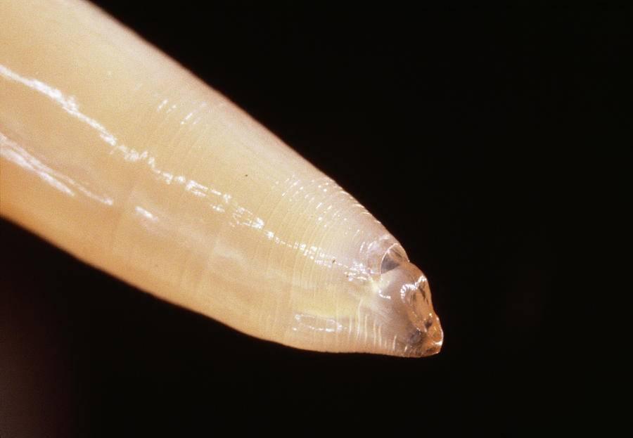Сонник черви влагалище. к чему снится черви влагалище видеть во сне - сонник дома солнца