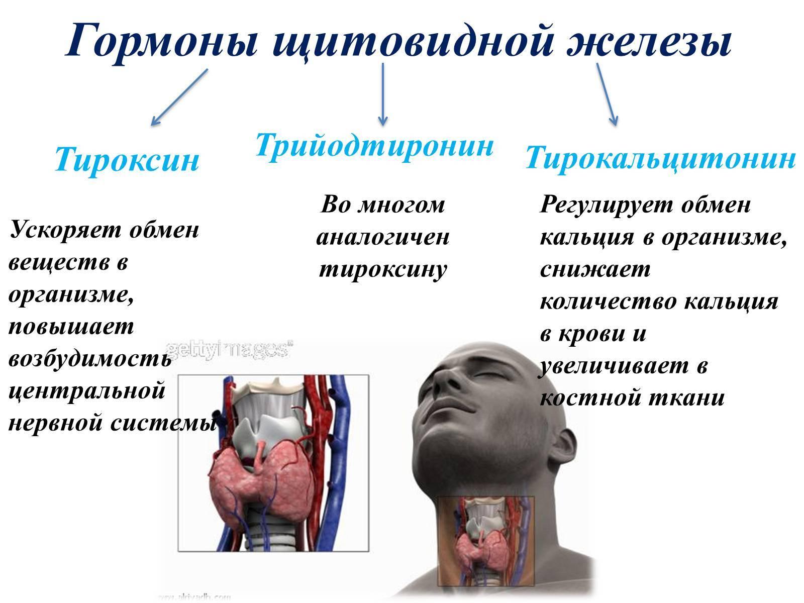 Лекарства, таблетки, препараты от щитовидной железы